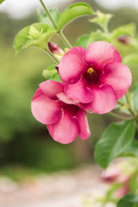 pink_flowers_tiny_close